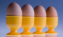 Four eggs in a row Stock Photography