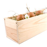 Four eggs in wooden box Stock Image