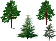 Four evergreen trees isolated on white Stock Images