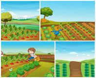 Four farm scenes with vegetables and scarecrow Stock Photo