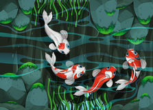 Four fish swimming in the pond Royalty Free Stock Photography