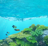 Four fishes and cay under blue water. With bubbles Stock Photography