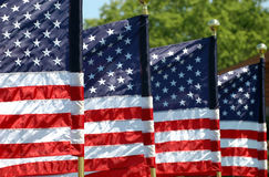 Four Flags. Four American Flags Flying in breeze royalty free stock images