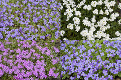 Four Flower Fields Royalty Free Stock Photography
