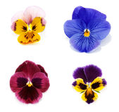 Four flower with petal. Collage Four flower with petal insulated on white background Stock Photo