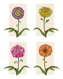 Four Flowers. Vector art in Illustrator 8. Hand drawn, chrysanthemum, peony, daisy and calendula flowers Royalty Free Stock Photography