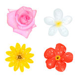 Four Flowers With Drops Set Stock Photos