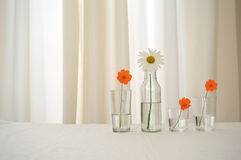 Four Flowers in Glasses. Over a table, decorating it Royalty Free Stock Images