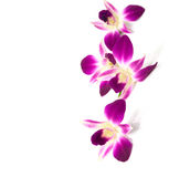Four flowers of orchid isolated on a white background. Selective focus Royalty Free Stock Photos