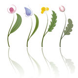 Four flowers. Vector Stock Photography