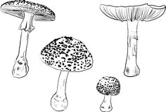 Four fly agaric sketches isolated on white Royalty Free Stock Photography
