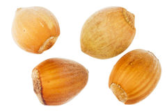 Four forest hazelnuts Stock Photography