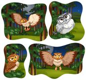 Four forest scenes with owl flying. Illustration Royalty Free Stock Images
