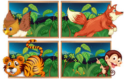 Four forest scenes with wild animals Royalty Free Stock Image