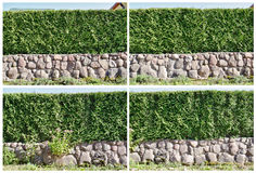 Four fragment of a  hedge Stock Photo