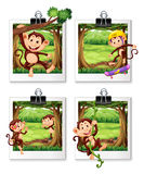 Four frames of monkey in the jungle Stock Photo