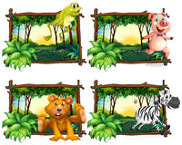 Four frames of wild animals in the jungle Stock Photography