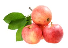 Four fresh apples Royalty Free Stock Photography
