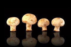 Four fresh field mushrooms Royalty Free Stock Images