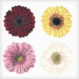Four Fresh Gerbera Flowers Isolated Retro Vintage Style Stock Photography