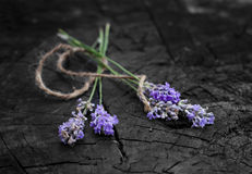 Four fresh lavender handmade bunches on the wooden Stock Photo