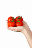 Four fresh red tomatoes in hands stock images