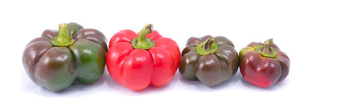 Four fresh sweet pepper Royalty Free Stock Photography