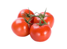 Four fresh tomatoes Stock Image