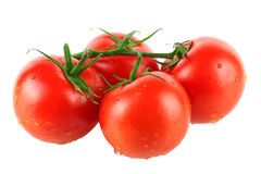 Four fresh tomatos Stock Photography
