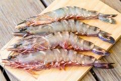 Four fresh whole tiger prawns Royalty Free Stock Image