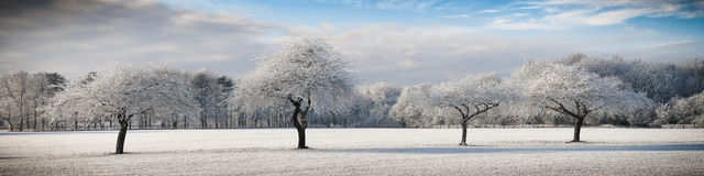 Four frozen trees Royalty Free Stock Image
