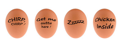 Four Funny Eggs. Four eggs with funny text on them Stock Photos