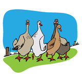 Four geese Royalty Free Stock Images