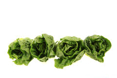 Four gem lettuce. Royalty Free Stock Images