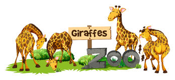 Four giraffes in the zoo. Illustration Stock Photo