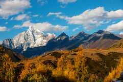 Four girl mountain autumn(siguniang). Four girl mountain of autumn(siguniang in sichuang of China Royalty Free Stock Photo