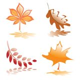Four glossy autumnal leaves Stock Photo