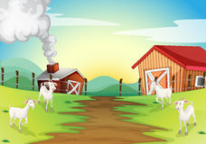 Four goats in the farm. Illustration of the four goats in the farm Royalty Free Stock Photography
