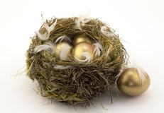 Four gold nest eggs Stock Photography