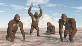 Four Gorillas Stock Images