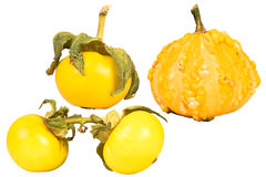 Four gourds Royalty Free Stock Images