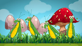 Four grasshoppers on the lawn Royalty Free Stock Images
