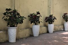 Four Green Leaf Plants With White Pots royalty free stock images