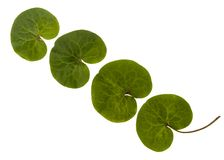 Four green leaves in line Stock Photos