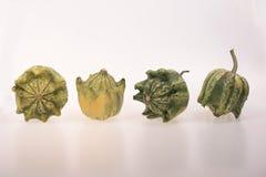 Four green pumpkins Royalty Free Stock Photo