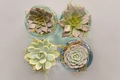 Four Green Succulent Plants With Glass Pot Stock Photography