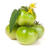 Four green unripe tomato with a flower and leaf  on white background Stock Photography