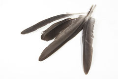 Four Grey Birds Feathers with Pointed Quills on White Stock Photo