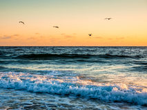 Four Gulls Flying over Morning Surf Stock Photography