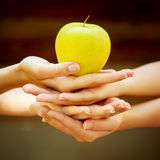 Four hand with apple Royalty Free Stock Image